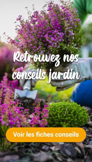 Découvrez nos conseils jardin