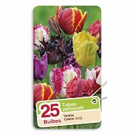 Tulipe perroquet mélange 11/12 sachet de 25
