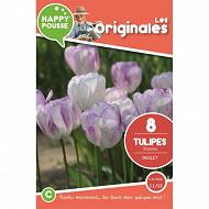 8 tulipe triomphe shirley 11/12