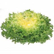 Salade frisée la pièce