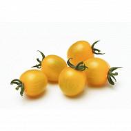 Tomate cerise ronde de couleur