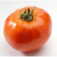 Tomate ronde à farcir