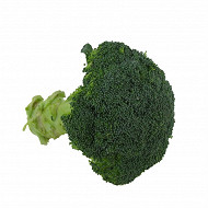 Brocolis bio le kilo