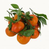 Clementine feuille bio