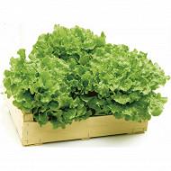 Salade Batavia blonde