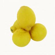 Citron filet 500g