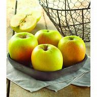 Pomme Golden le sachet 1,5kg