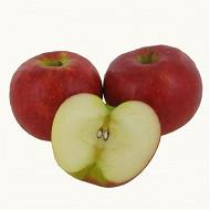 Pomme Antares