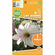 Dahlia simple lady bee I x 1