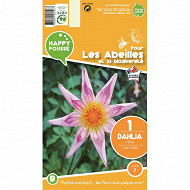 Dahlia honka fancy pants x1 calibre I