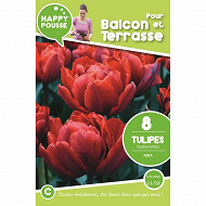 8 tulipe double hative abba 11/12