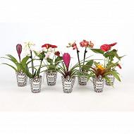 Plantes tropicales dans pot cover