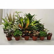 Plantes vertes pot diamètre 9cm