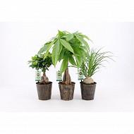 Plantes vertes résistantes mix diam12cm en pot métal iron leaf