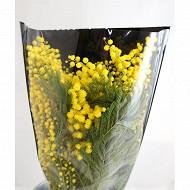 Bouquet mimosa 200 gr