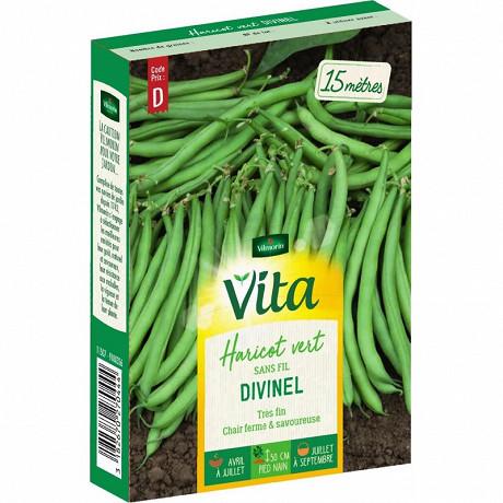 Vita Vilmorin haricot divinel