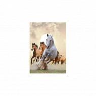 BEI agenda chevaux