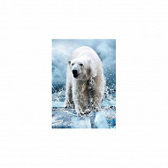 BEI agenda ours blanc
