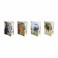 Agenda fantaisie mon cheval me dit 1 jour/p 12x17 384 pages