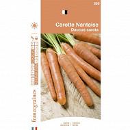 France graines carotte nantaise améliorée 3