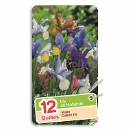 Iris hollandica mélange 7/8 x12