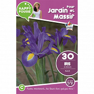 30 iris de hollande  bleus 7/8