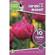 10 tulipe double hative margarita 11/12