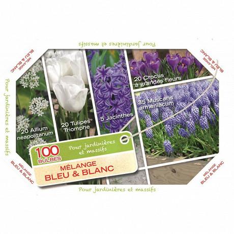 Cagette de 100 bulbes mélange bleu et blanc