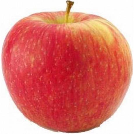 Pomme honey crunch