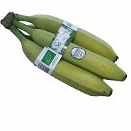 Banane bio 5 fruits
