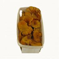 Girolles fraîches barquette 250g
