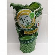 Basilic bio pot 1L grandes feuilles