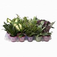 Plantes vertes succulents cactus dans pot cover