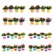 Mix mini plantes fleuries en céramique dots + noeud
