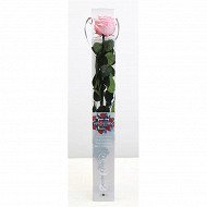 Rose naturelle stabilisée rose pastel