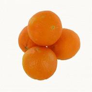 Orange bio à déguster sachet 4 fruits
