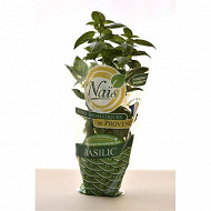 Herbe fraiche bio basilic