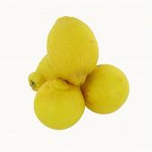 Citron jaune bio x4