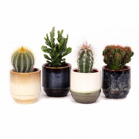 Cactus dans pot deco