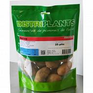 Pomme de terre ratte 25/32 clipack 25 plants