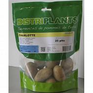 Pomme de terre charlotte 25/32 25 plants