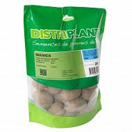 Pomme de terre maiwen 28/35 verbag 25 plants