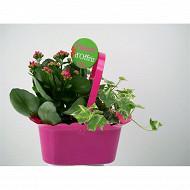 Composition fête des mères 2 plantes référence 49161