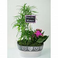 Composition fête des mères 2 plantes référence 57379