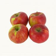 Pomme gala bio barquette 4 fruits