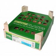 Amandine 25/30 clayette 60 plants