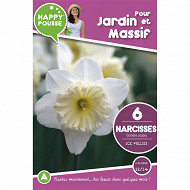6 narcisse grande coupe ice follies 12/14