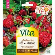 Vita Vilmorin fraisier 4 saisons
