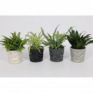 Plantes vertes mix dans pot deco diam 12 cm ht 30-40 cm