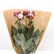 Bouquet 5 pivoines